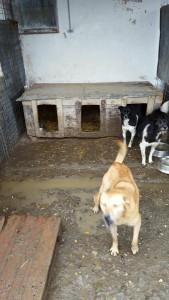 hunde2