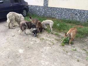 hunde4